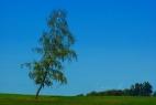 birke-wind