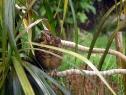 jungdrossel-nach-flugversuch-unter-palmen